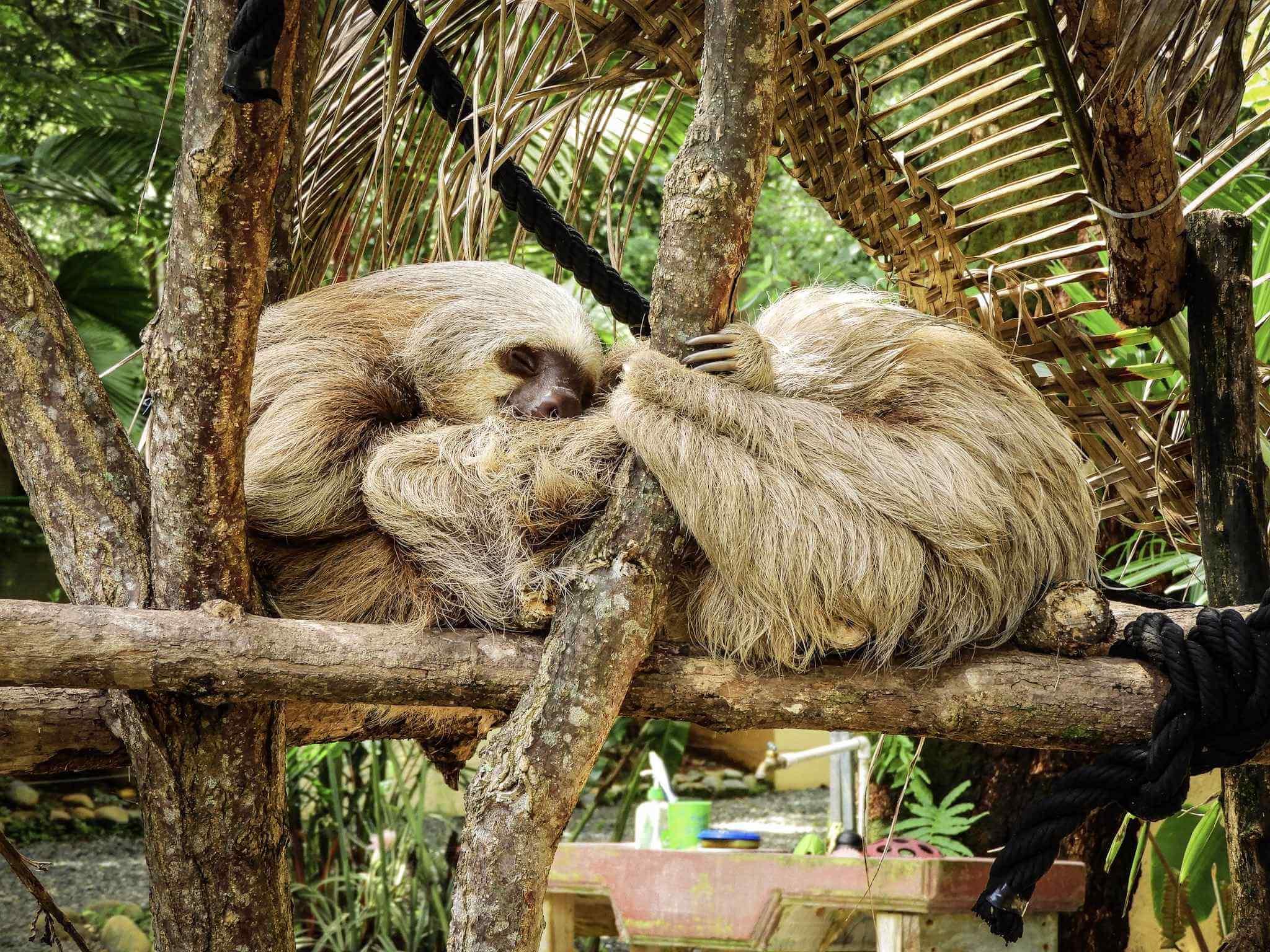Alturas Wildlife Sanctuary in Costa Rica