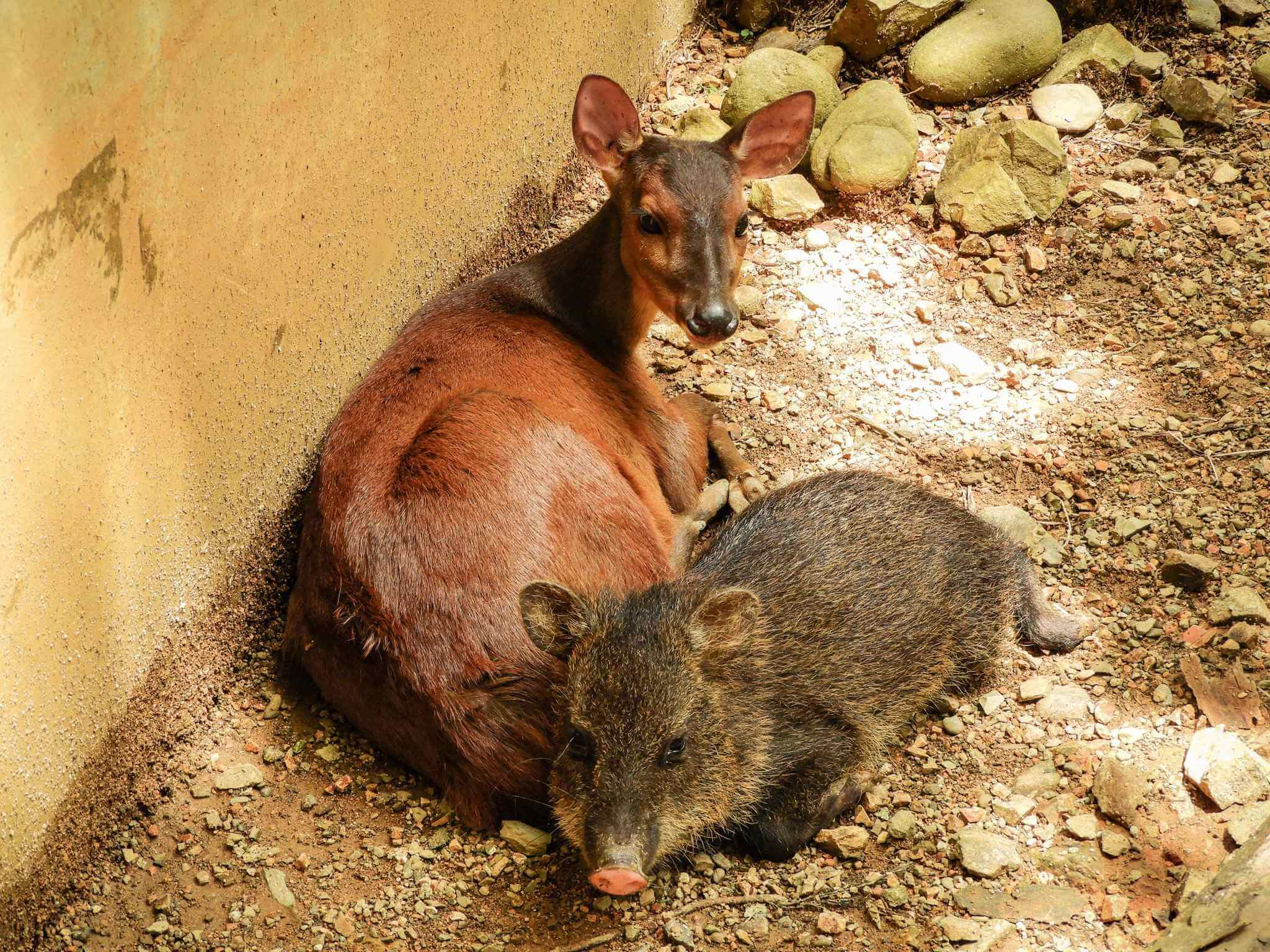 Alturas Wildlife Sanctuary - wildlife van Costa Rica
