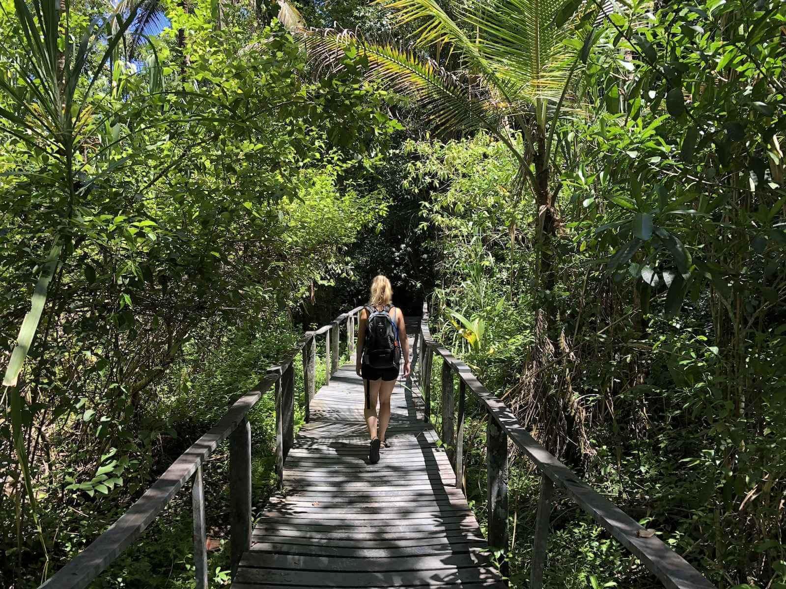 Cahuita National Park bezienswaardigheden - regenwoud