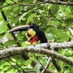 costa-rica-alles-wat-je-moet-weten
