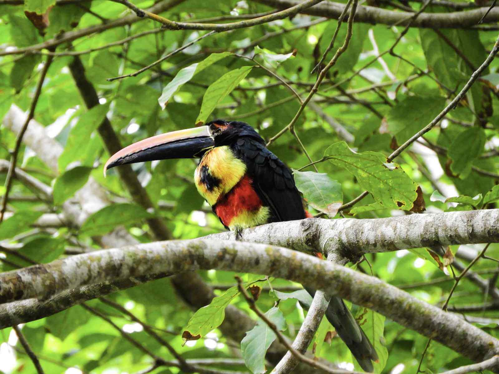 Manuel Antonio - National Park vol wildlife