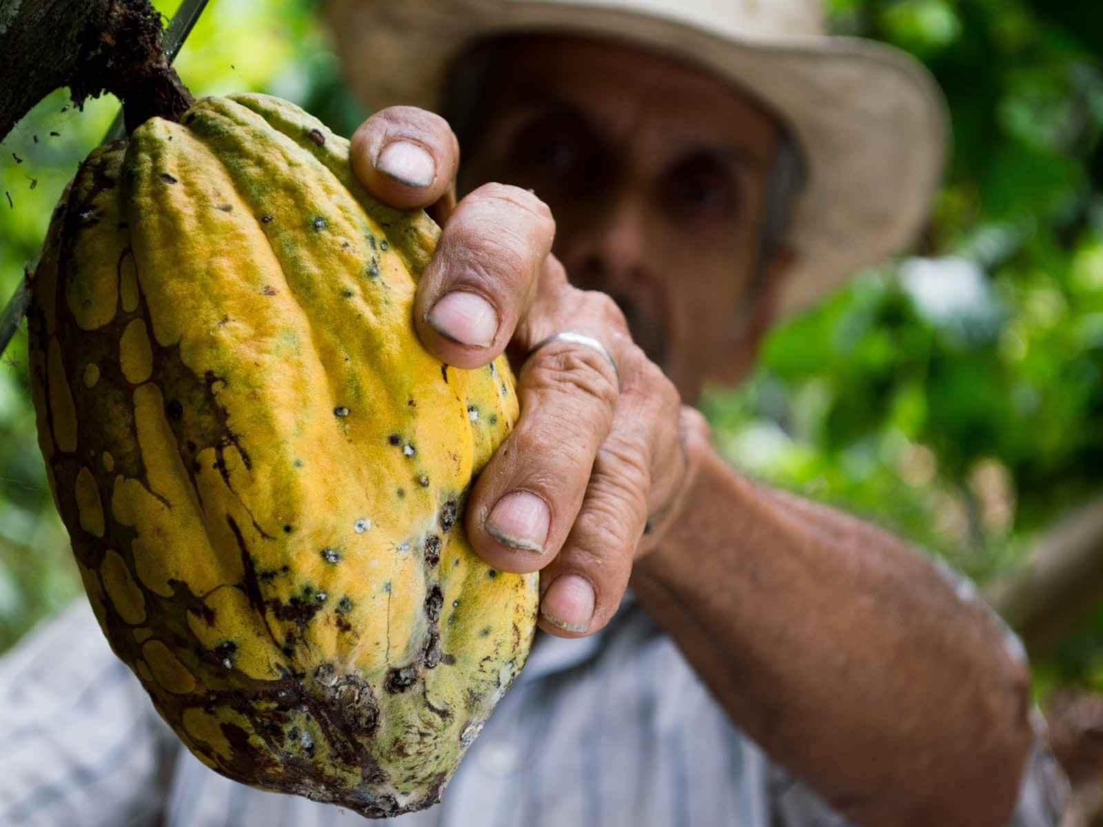 Puerto Viejo bezienswaardigheden & activiteiten: chocolade tour