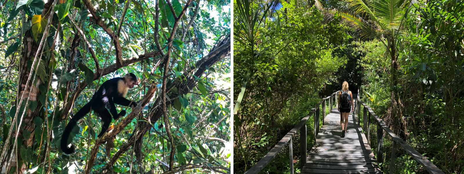 Puerto Viejo bezienswaardigheid: bezoek Cahuita National Park