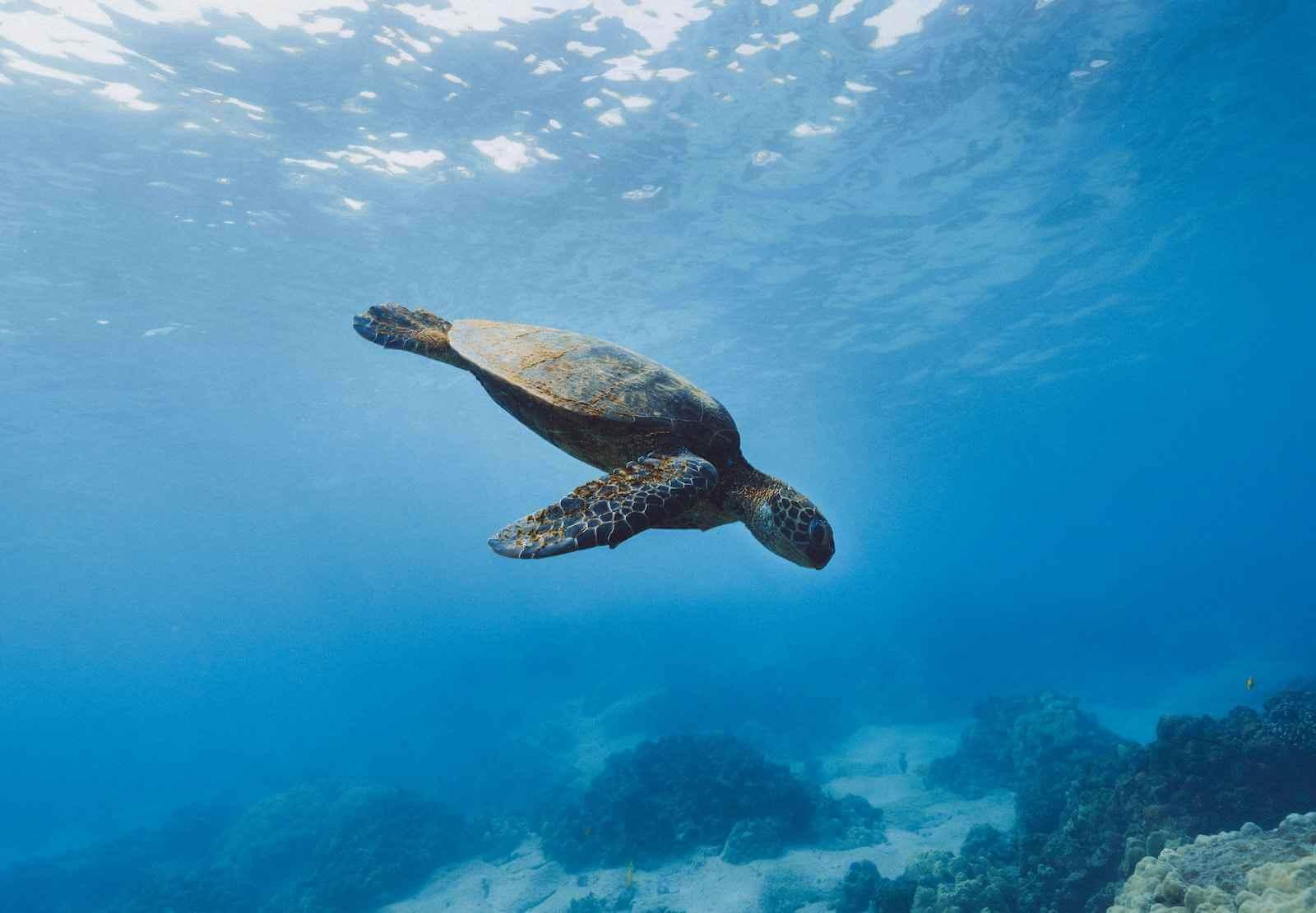 Snorkelen in Cahuita