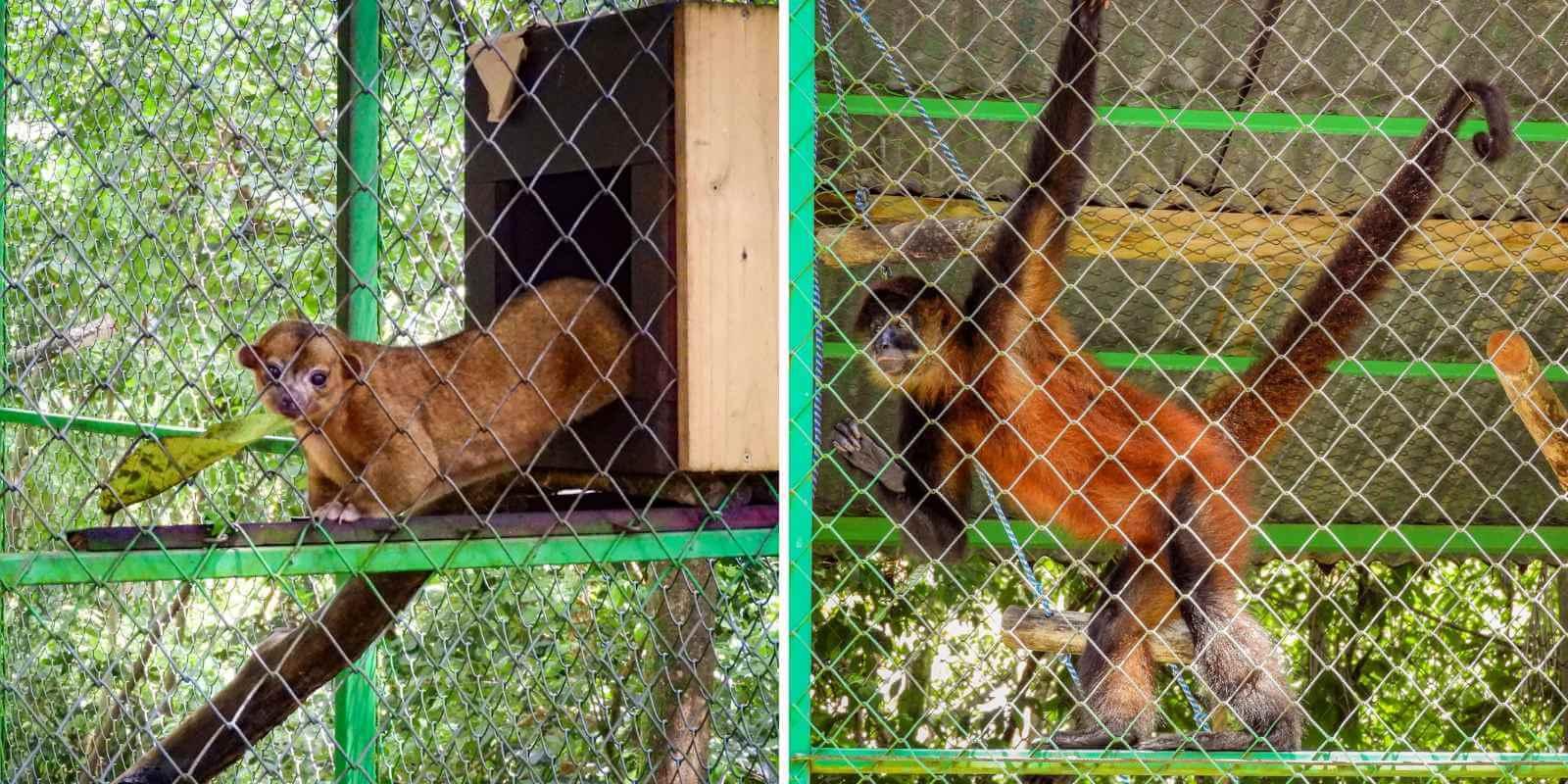 Het wildlife in de Alturas Wildlife Sanctuary