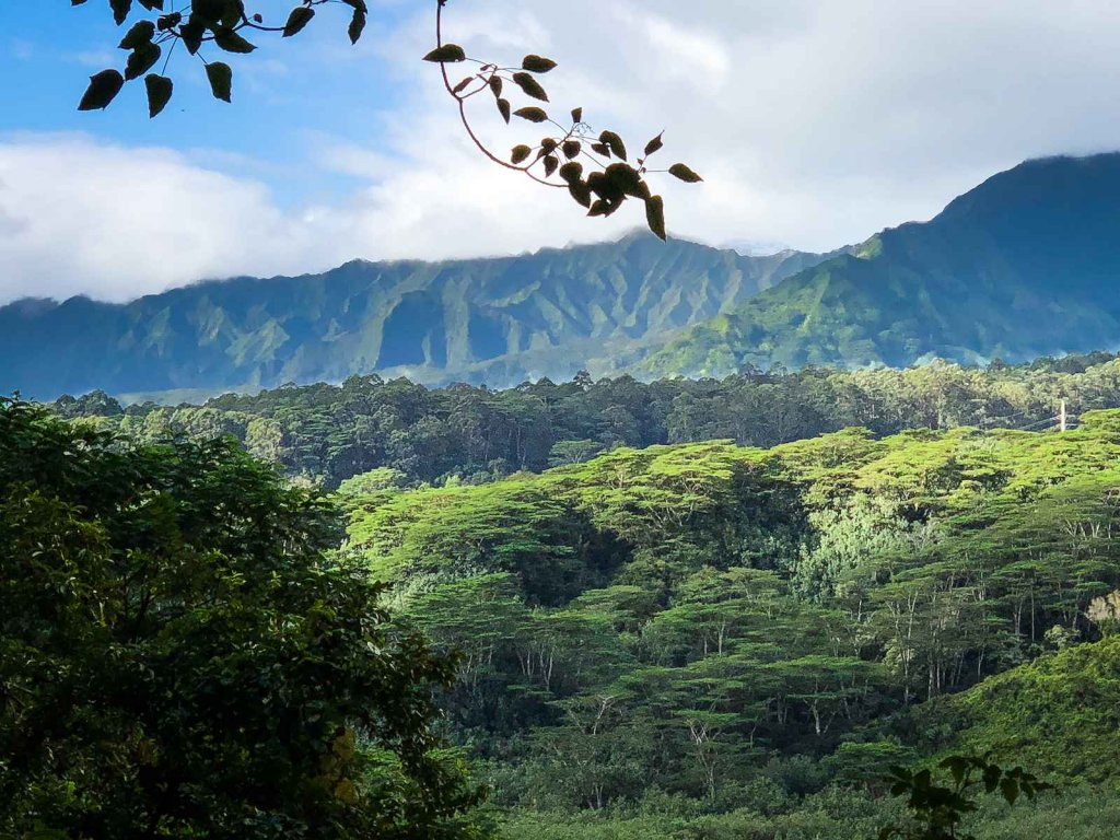 Top 3 mooiste hikes op Kauai -  Kuilau Ridge Trail
