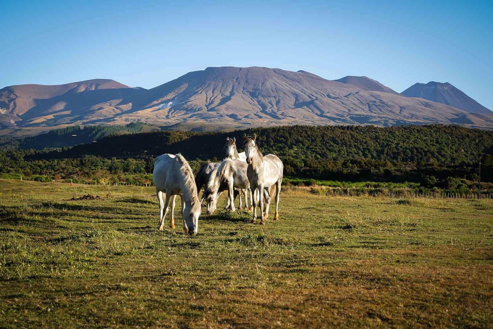 Tongariro National Park - overnachten bij camping Cross Roads