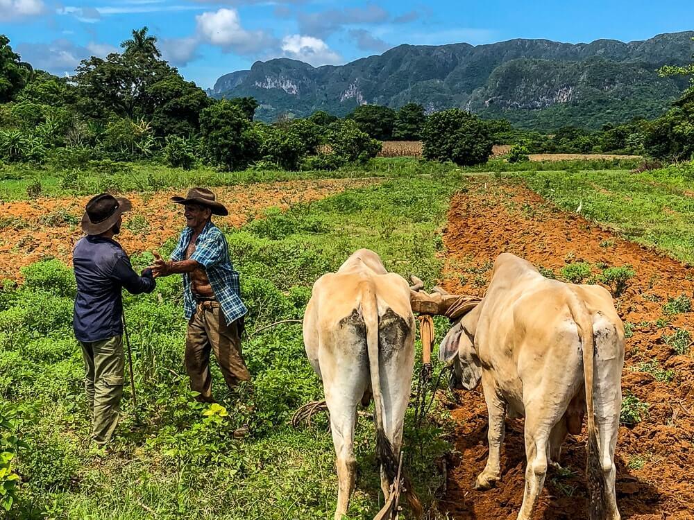Vinales - Prachtige vallei die bekend staat om zijn tabakshuisjes