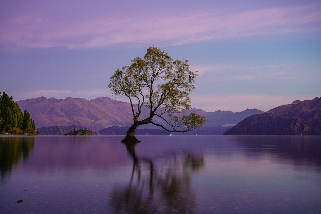 Wanaka Tree - Zuidereiland Nieuw-Zeeland