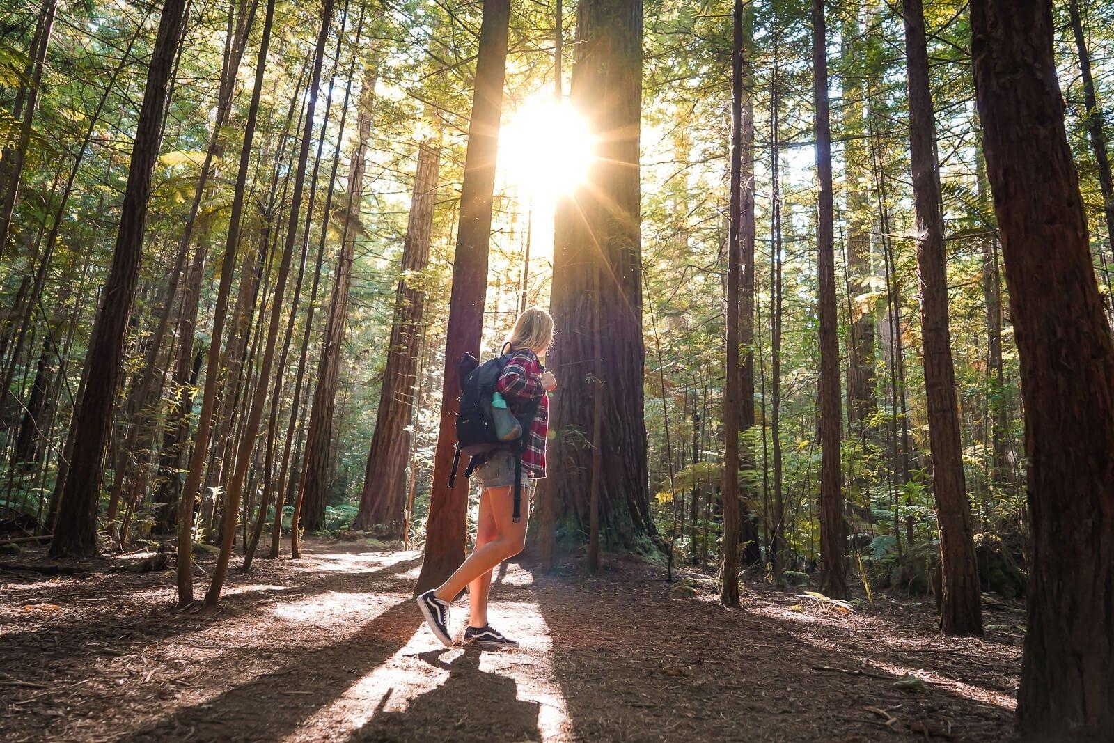 Beste daghikes Noordereiland Nieuw-Zeeland - Redwoods Rotorua