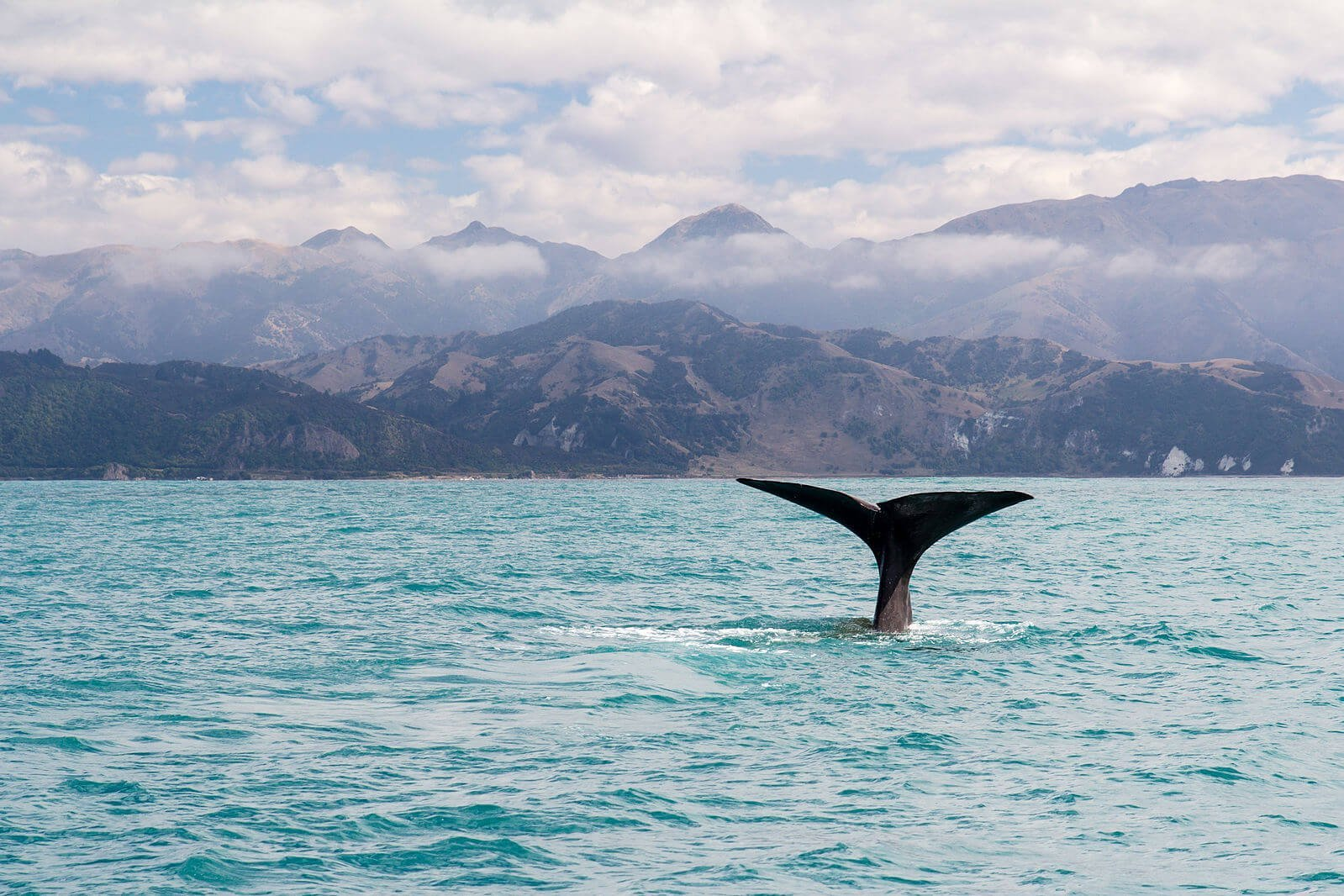 Walvissen spotten in Kaikoura - Zuidereiland Nieuw-Zeeland