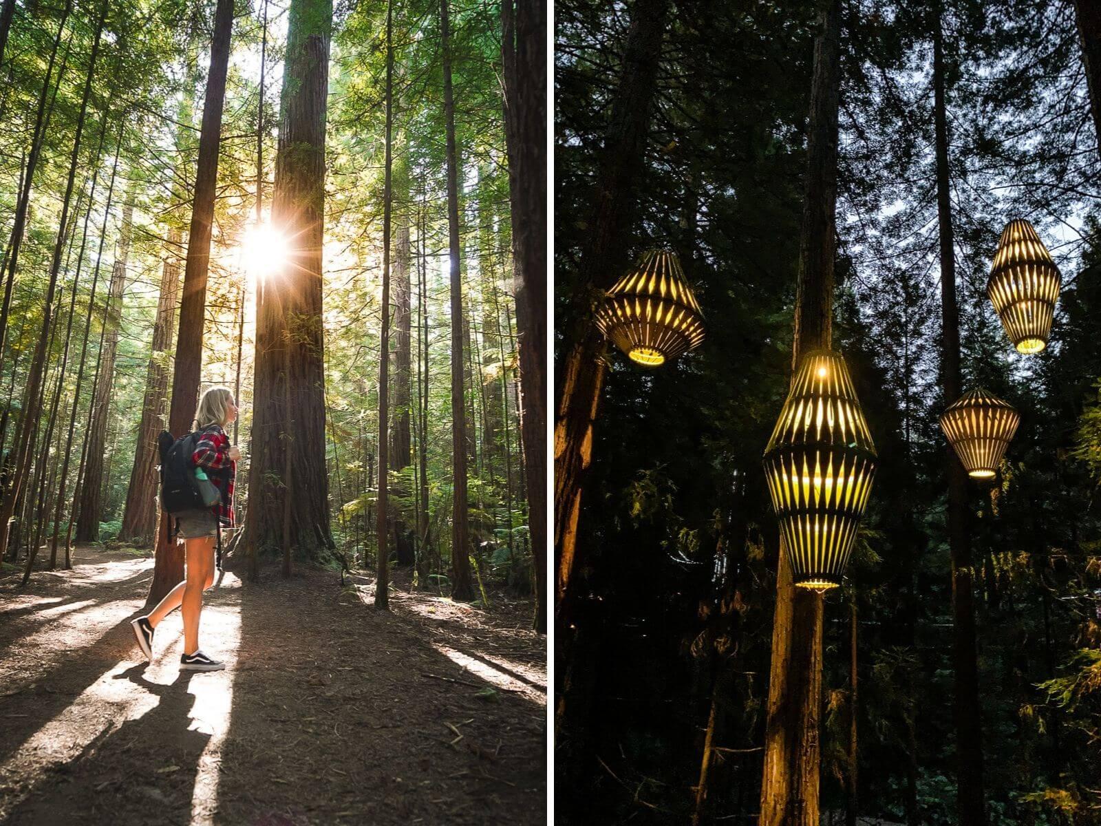 Redwoods Rotorua - by NOMDS
