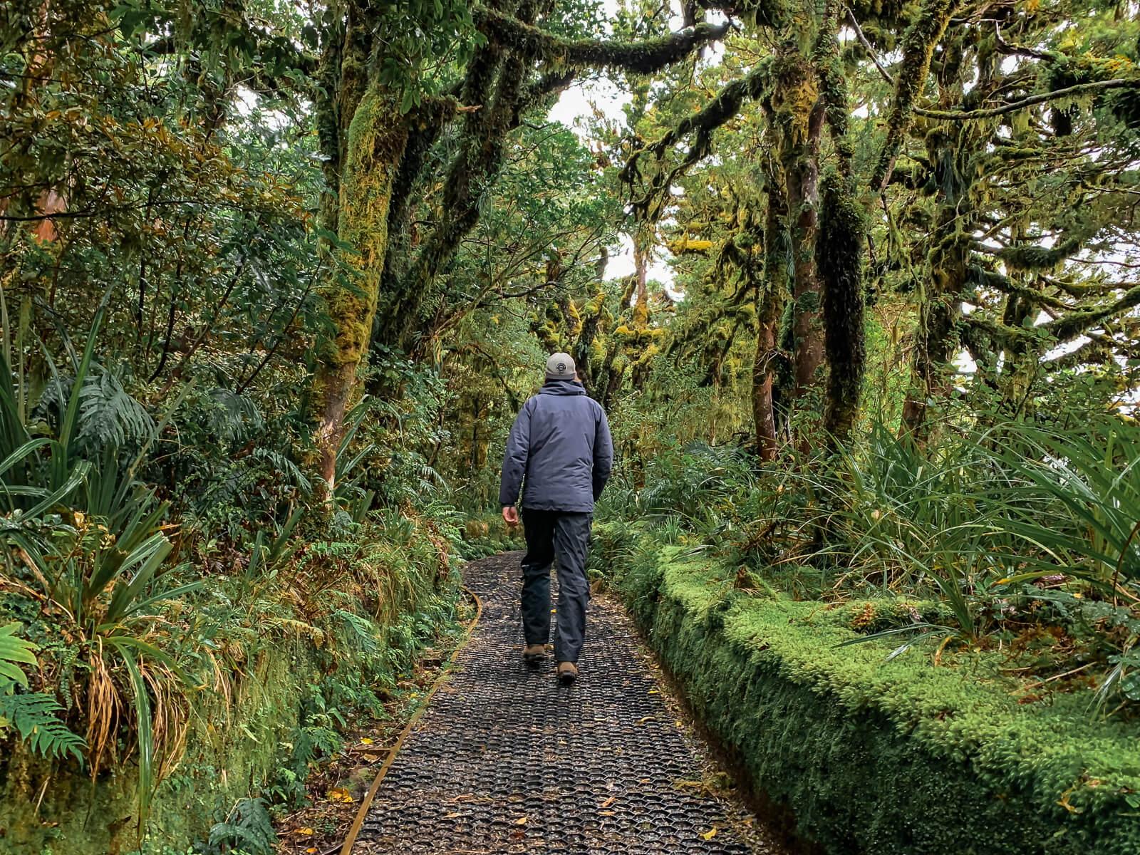 Tijdens de Wilkies Pool Loop door je door het sprookjesachtige Goblin Forest - by NOMADS