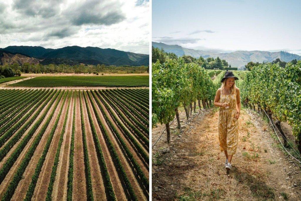 Marlborough Nieuw Zeeland: de wijnstreek van Nieuw Zeeland